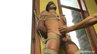 Hung Stud Tied Up and Dick Edged