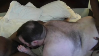 big-bellied black top men fuck hairy bear