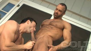 Colt studs having man sex