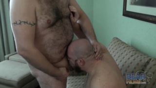 hairy bears banging bellies