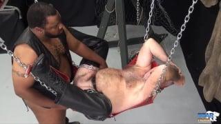 black daddy fucks hairy bear in sling