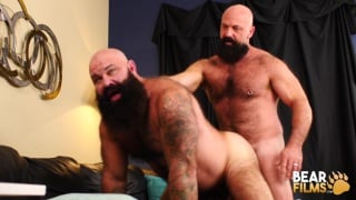bald bears with huge beards fucking