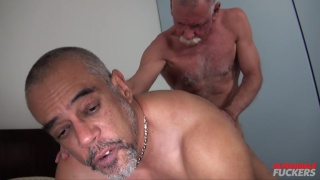 silver daddy eats his lover's ass before fucking it