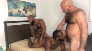 Hairy Bald Daddy Has Threeway with Two Black Men