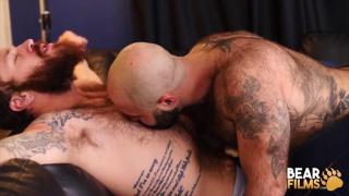 bald hairy muscle bear services a bearded daddy's cock
