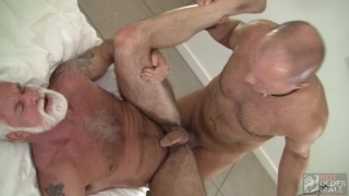silver daddy flip-fucks with a bald hairy man