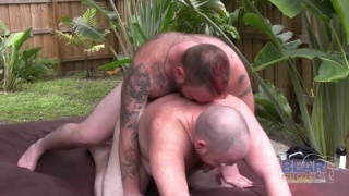 Hairy Bears Fucking in Backyard
