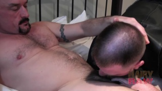 bald muscle stud barebacking bearded daddy