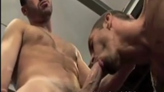 Hairy studs having bareback sex