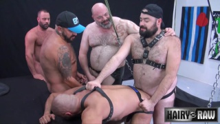 bald bottom in leather harness gets banged