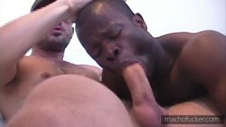 black bottom services arabian hunk
