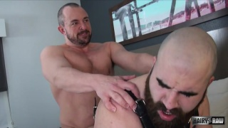 bald bearded bottom bear gets fucked in his harness