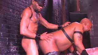 leather hunk is harness gets his hole bred