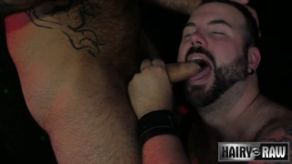 hairy muscle bear plays with a sexy bear cub