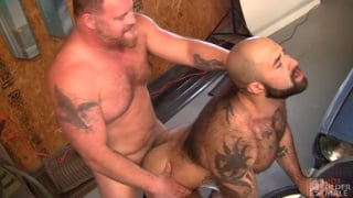 ginger daddy bear fucks very hairy muscle bear