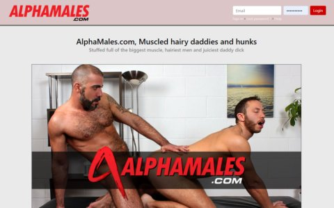all videos uploaded by Alpha Male Fuckers